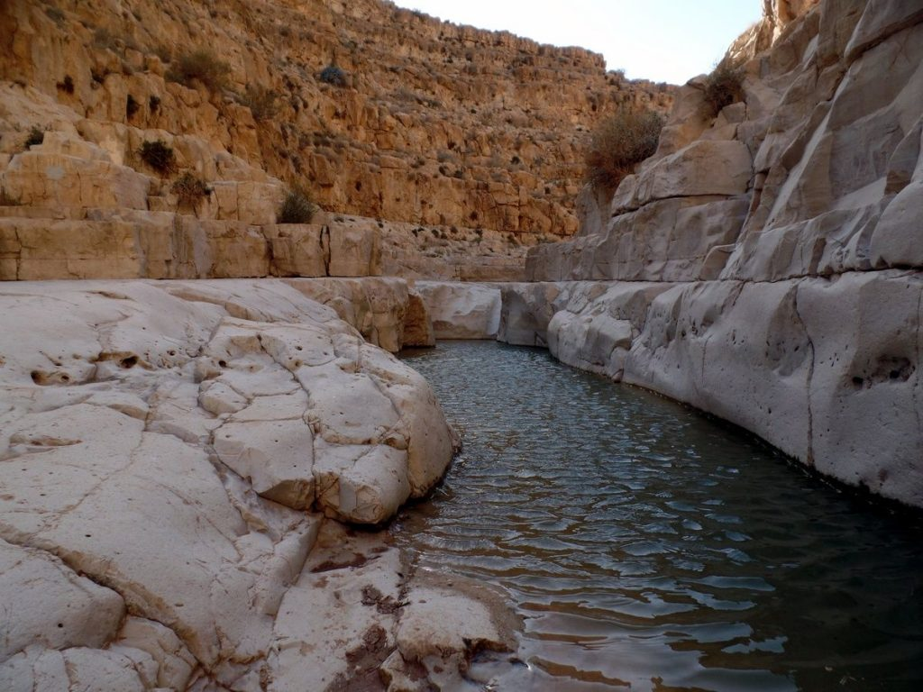 a waterhole in Upper Ze'elim Wadi.