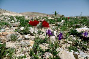 פריחה במדבר - נחל חסד